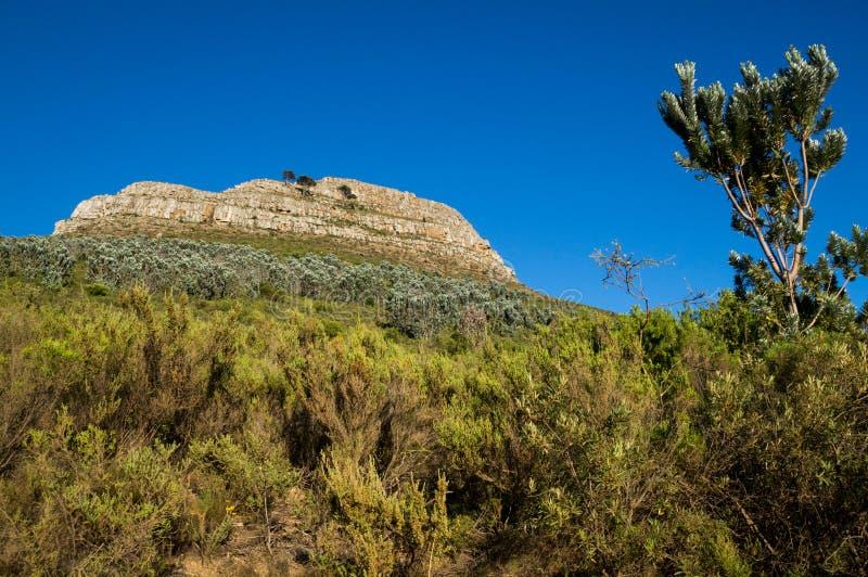 Widok wierzchołek lew głowa, halny szczyt w Kapsztad obrazy royalty free