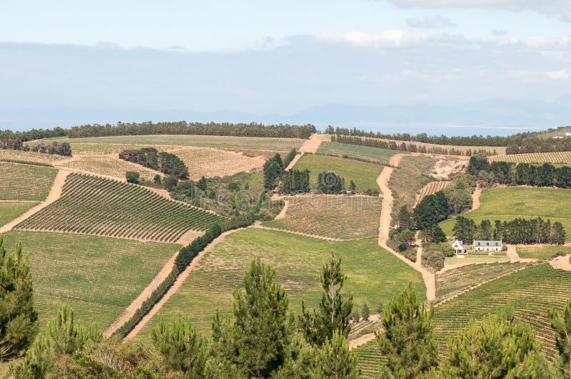 Widok wina gospodarstwo rolne blisko Sir Lowrys Przechodzący obraz royalty free