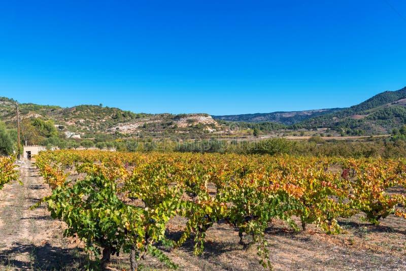 Widok winnica na tle halny krajobraz, Siurana, Tarragona, Catalunya, Hiszpania Odbitkowa przestrzeń dla teksta zdjęcie stock