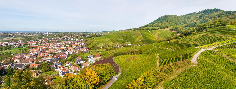 Widok winnicy zbliża Ortenberg zdjęcie stock