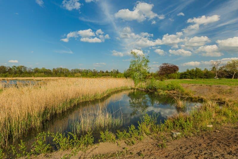 Widok wiosna wiejski krajobraz z małym jeziorem fotografia stock