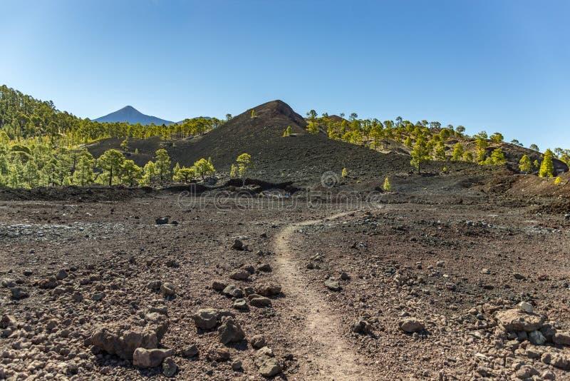Widok wulkan Chinero, ostatnia erupcja 1909 jasne niebo niebieskie Teide Sosna las, lawowi pola i skały, Tenerife, kanarek zdjęcie stock