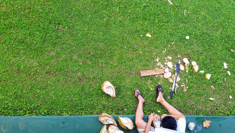 Widok Z Góry Na Kostiucie Na Balkonie, Patrzącym Na Człowieka Chrupiącego Kokosy Na Hawajach zdjęcia royalty free