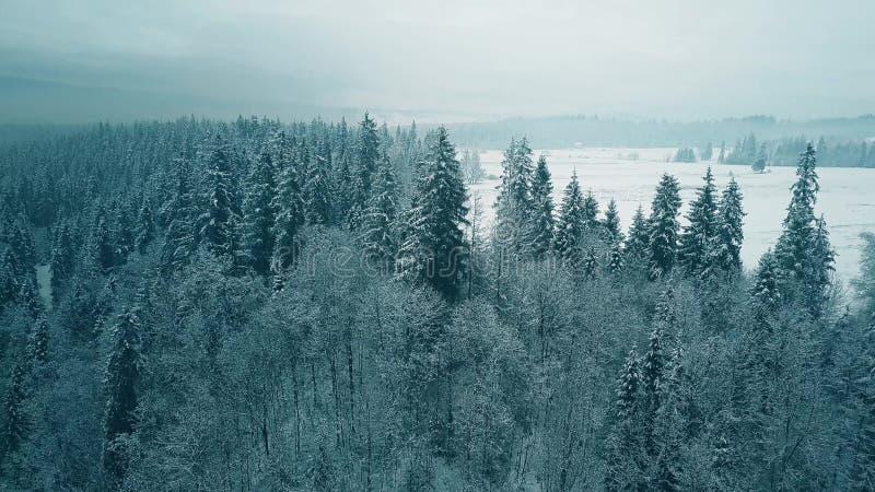 Widok z lotu ptaka śnieżny las w zimie obrazy stock