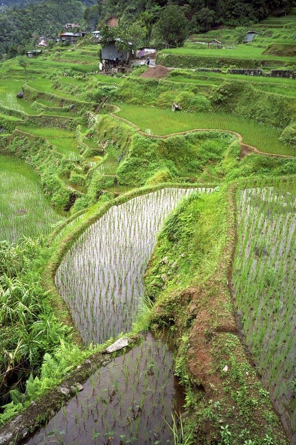 Widok z lotu ptaka światowi sławni ryżowi tarasy, Banaue obraz royalty free