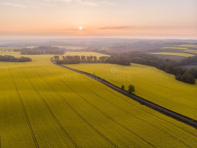 Widok z lotu ptaka żółty canola pole, wiejska droga przy wschód słońca i obrazy royalty free