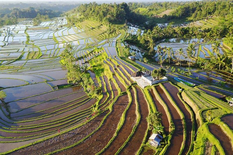 Widok z lotu ptaka Bali Ryżowi tarasy obraz royalty free