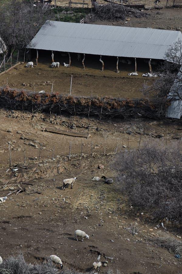 Widok z lotu ptaka corral z sheeps i kózkami zdjęcie stock