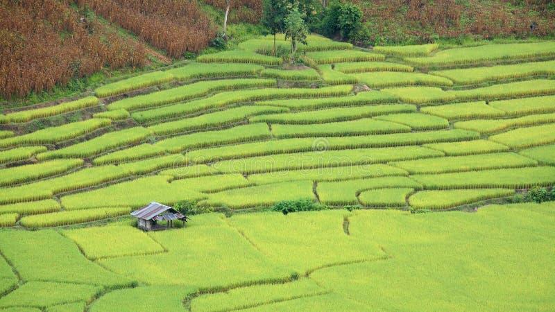 Widok z lotu ptaka dom przy ryż pola tarasami obrazy stock