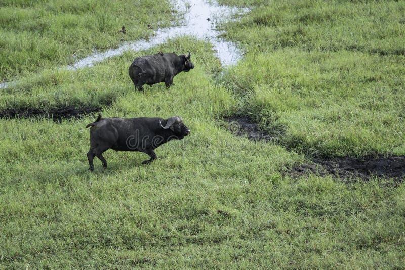 Widok z lotu ptaka dwa przylądków bizon obrazy royalty free