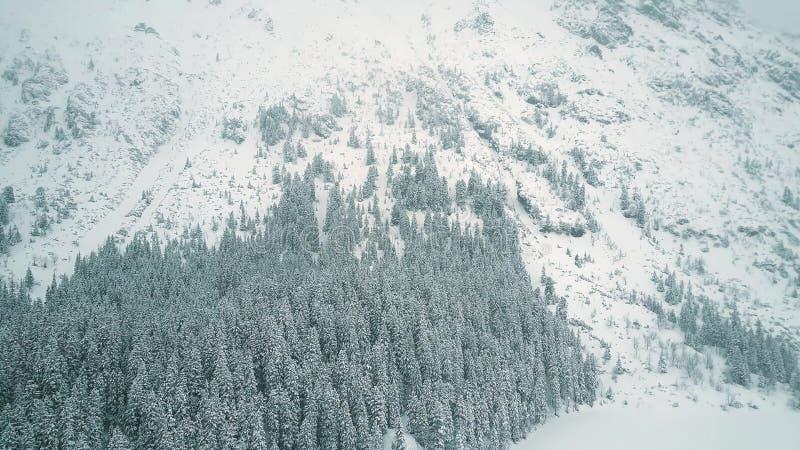 Widok z lotu ptaka górski las w spada śniegu zdjęcie royalty free