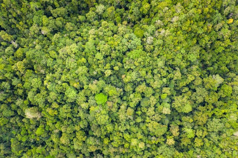 Widok Z Lotu Ptaka Gęsty tropikalny las deszczowy w Raja Ampat fotografia stock