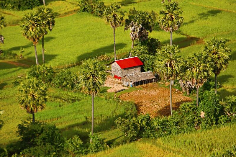 Widok z lotu ptaka gospodarstw rolnych pola i dom angkor banteay Cambodia jeziorni lotuses przeprowadzać żniwa siem srey świątyni fotografia stock