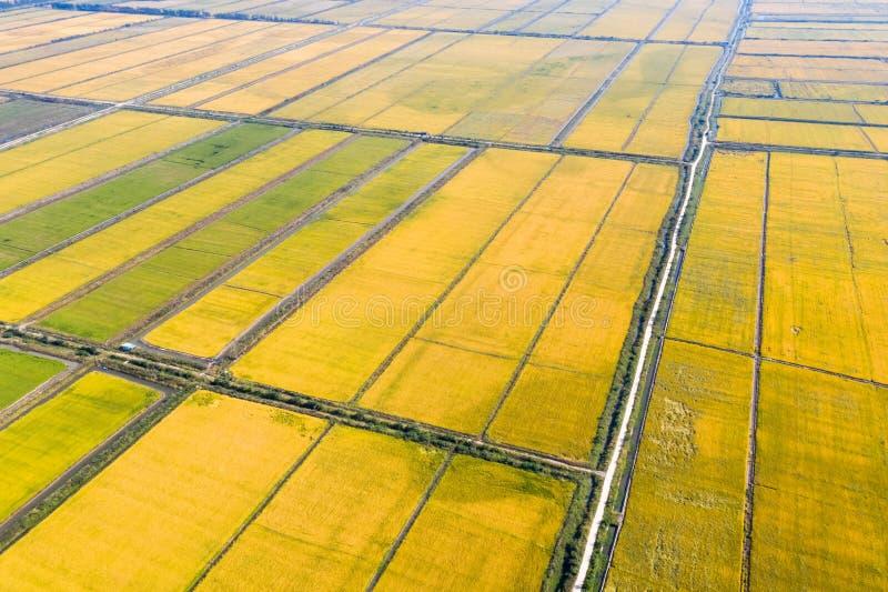 Widok z lotu ptaka jesień ryż pole zdjęcia royalty free