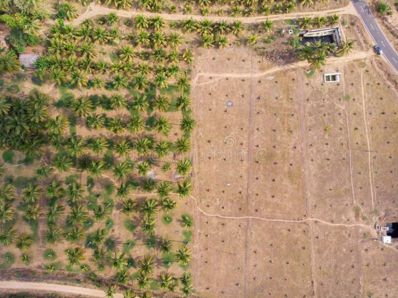Widok z lotu ptaka kokosowy gospodarstwo rolne z połówką swój drzewo ciąca puszek opłata bieda deszczu spadek powoduje ciężką sus fotografia royalty free