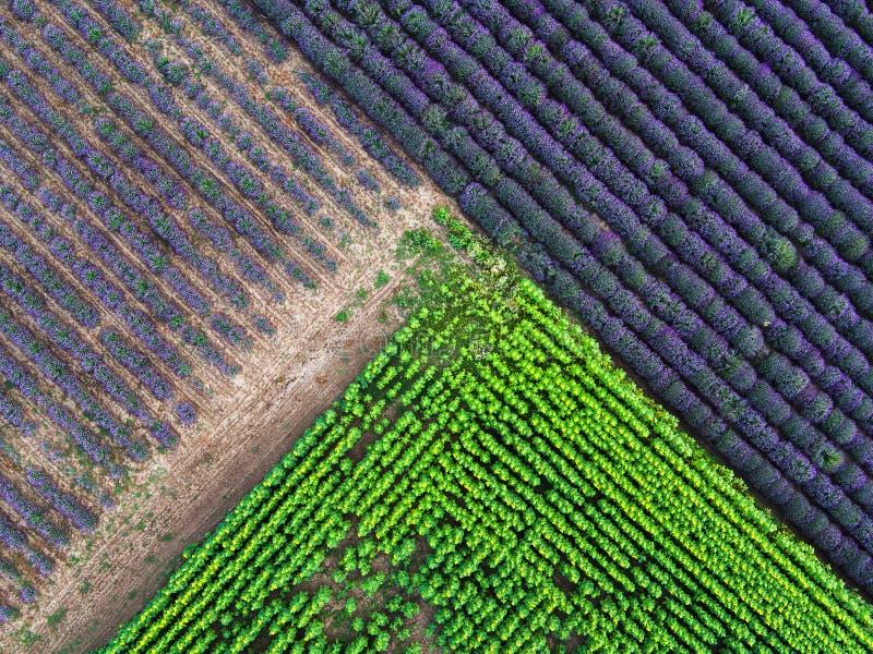 Widok z lotu ptaka krajobraz z lawendy i słonecznika polem zdjęcia stock