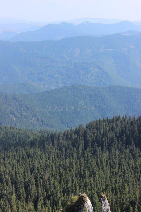 Widok z lotu ptaka lasy zdjęcia royalty free