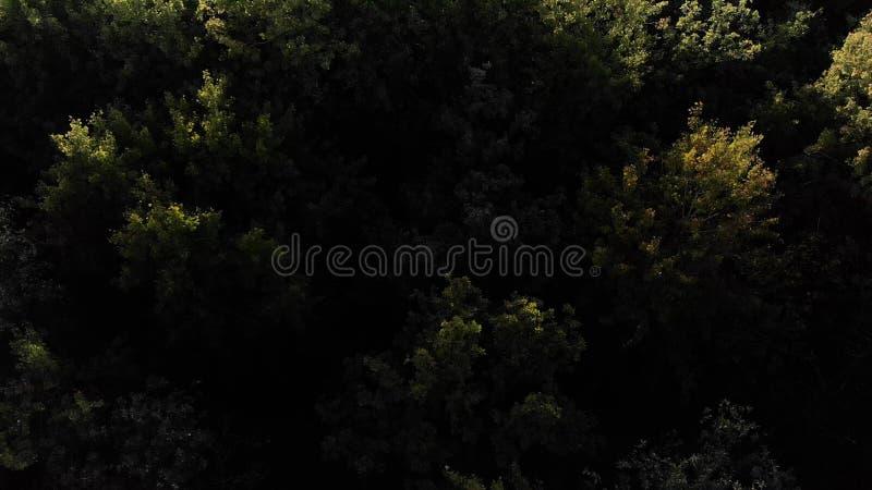 widok z lotu ptaka Latać nad pięknymi jesieni drzewami w lasowym Powietrznej kamery strzale Jesieni, spadku krajobraz/ 4K zdjęcia stock