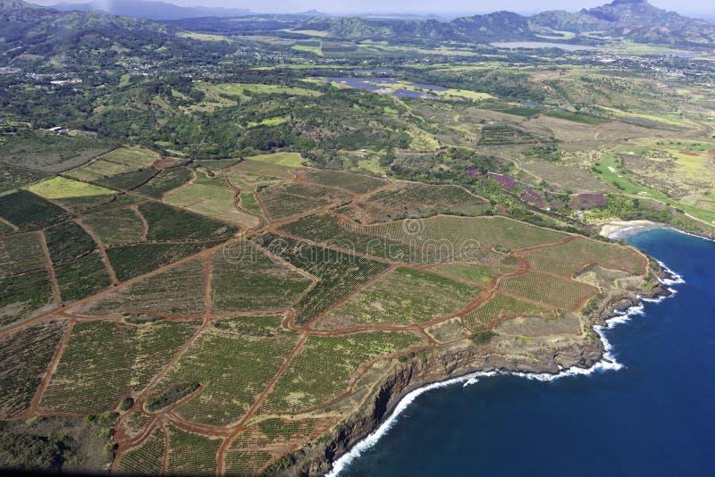 Widok z lotu ptaka na południowe wybrzeże Kauai pokazujący plantacje kawy w pobliżu Poipu Kauai Hawaii USA zdjęcie stock