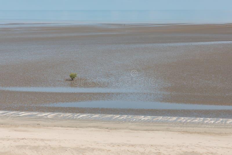Widok z lotu ptaka na wybrzeże błotnika z wodą unoszącą się w błocie i samotną namorzyną fotografia royalty free