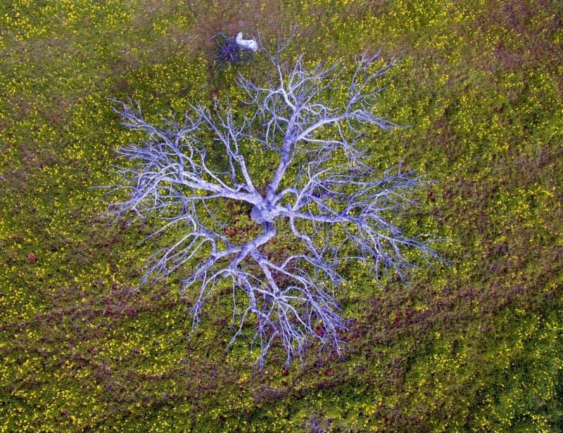 Widok z lotu ptaka od figi drzewa zdjęcia royalty free