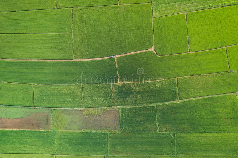 Widok Z Lotu Ptaka od Latającego trutnia Piękny zielony teren młody ric obrazy royalty free