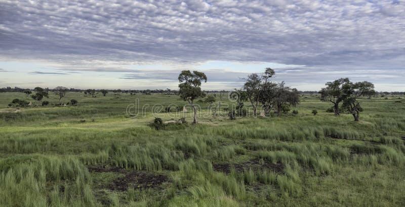 Widok z lotu ptaka Okavango delta w Botswana zdjęcia stock