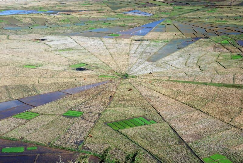 Widok z lotu ptaka Pajęczyny kształtni ryżowi pola zdjęcia stock
