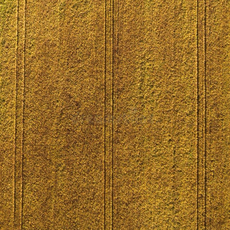 Widok z lotu ptaka pole z jesieni żniwem zdjęcie stock
