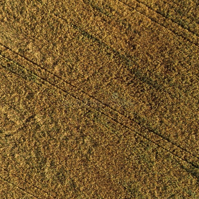 Widok z lotu ptaka pole z jesieni żniwem obraz stock