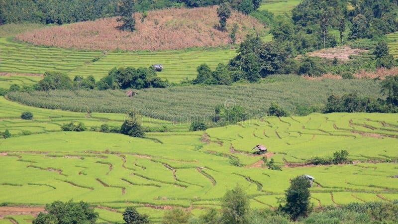 Widok z lotu ptaka tarasowaci ryżowi pola z domami obrazy stock