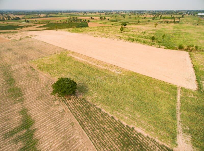 Widok z lotu ptaka trzcina cukrowa fotografia royalty free