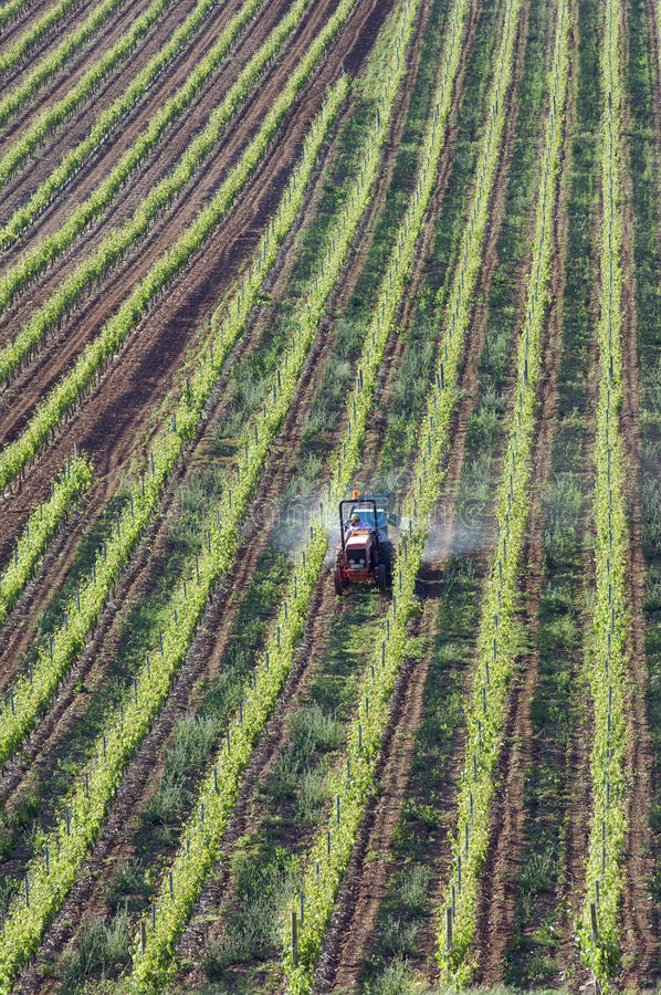 Widok z lotu ptaka w jego winnicy wina pracujący rolnik fotografia stock