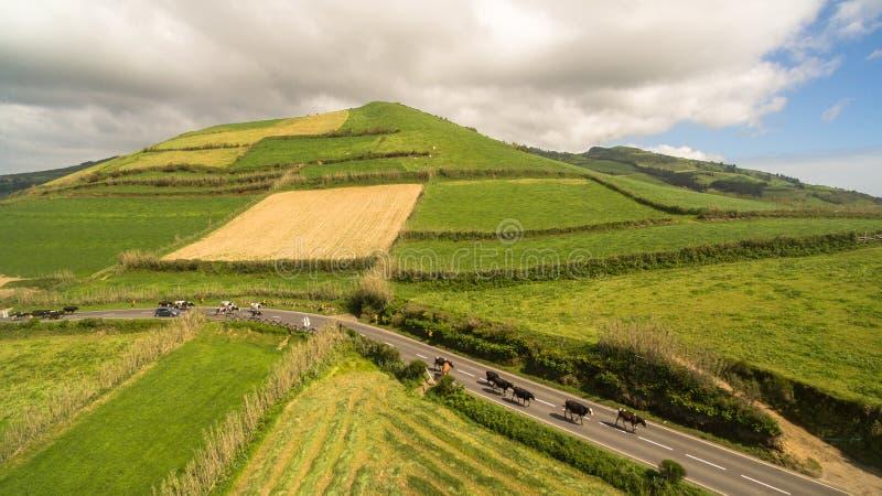 Widok z lotu ptaka wiejski krajobraz Sao Miguel wyspa z krowami Azores Portugalia obrazy stock