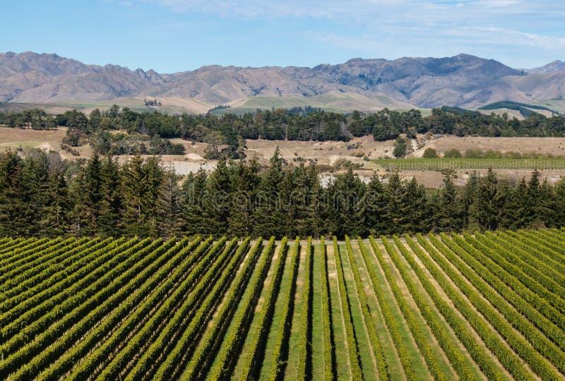 Widok z lotu ptaka winnica w Nowa Zelandia zdjęcia royalty free