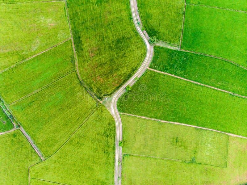 Widok z lotu ptaka zieleni ryż pola z drogą obrazy royalty free