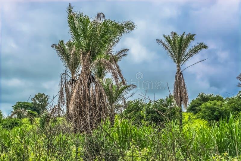 Widok z typowym tropikalnym krajobrazem, drzewami i innymi typami roślinność, fotografia stock