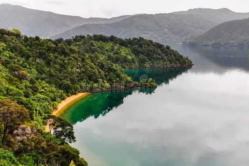 Widok zatoki w królowej Charlotte drodze, Nowa Zelandia obrazy royalty free
