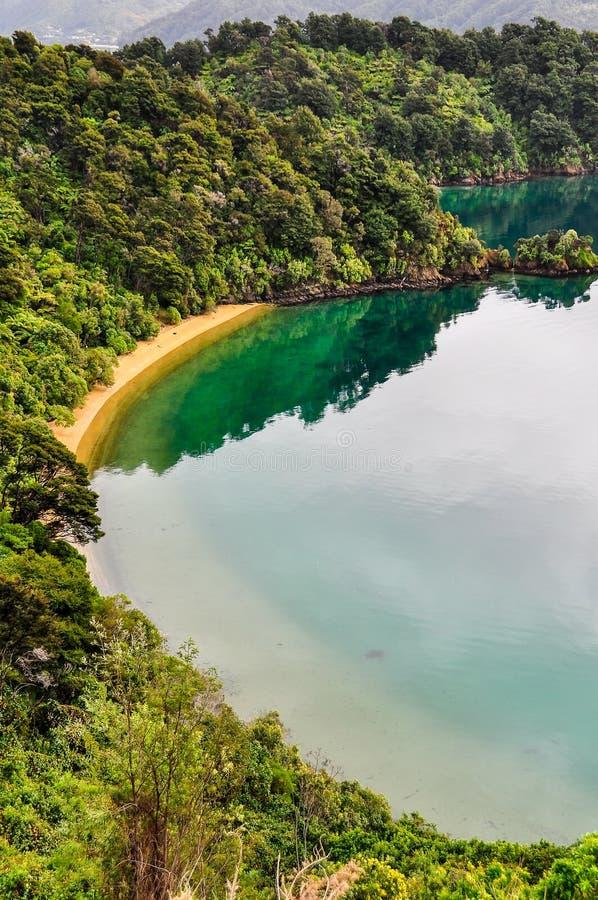 Widok zatoki w królowej Charlotte drodze, Nowa Zelandia zdjęcia royalty free