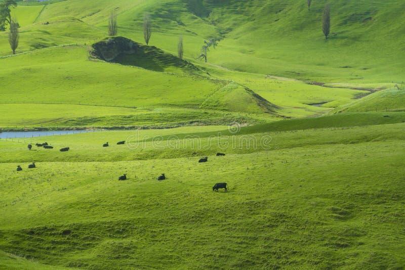 Widok zieleni wzgórza w Nowa Zelandia obraz stock