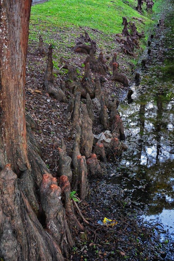 Widoki drzewa i unikalni natura aspekty otacza Nowy Orlean, wliczając odbijać basenów w cmentarzach i Ogrodowym okręgu zdjęcia royalty free