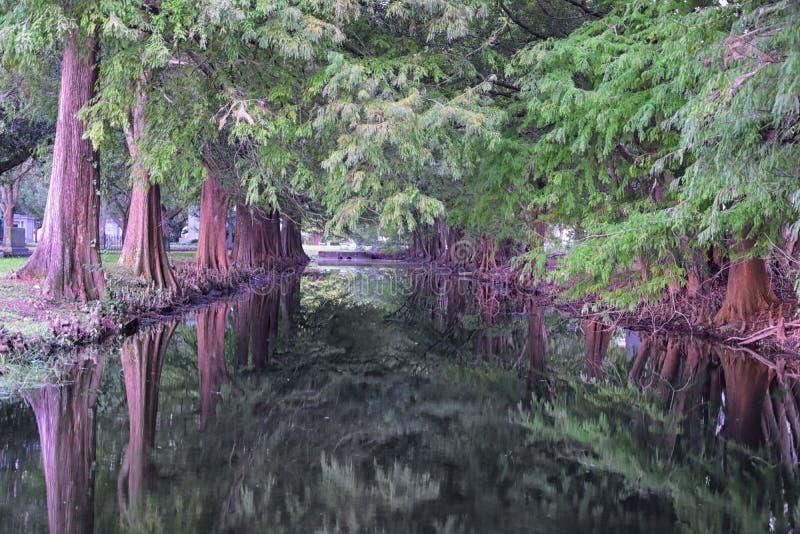 Widoki drzewa i unikalni natura aspekty otacza Nowy Orlean, wliczając odbijać basenów w cmentarzach i Ogrodowym okręgu obrazy royalty free