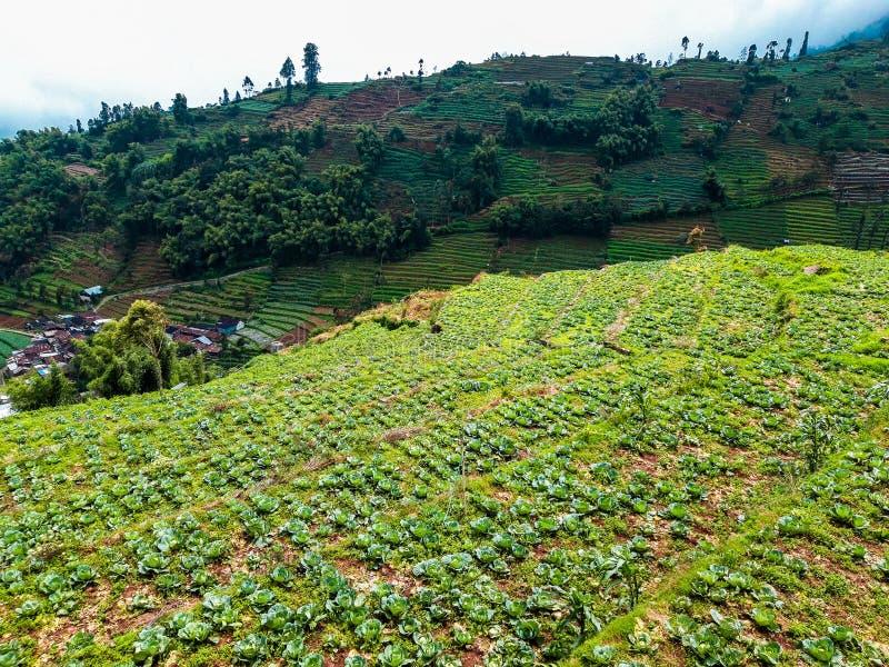 Widoki ryżowi pola w górach zdjęcie stock