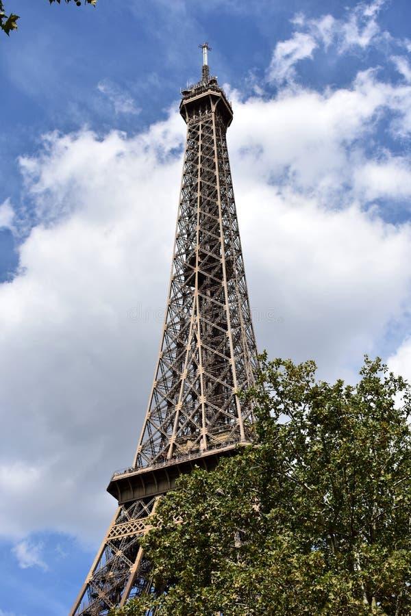 Wieża Eifla z drzewami, Paryż, Francja obraz royalty free