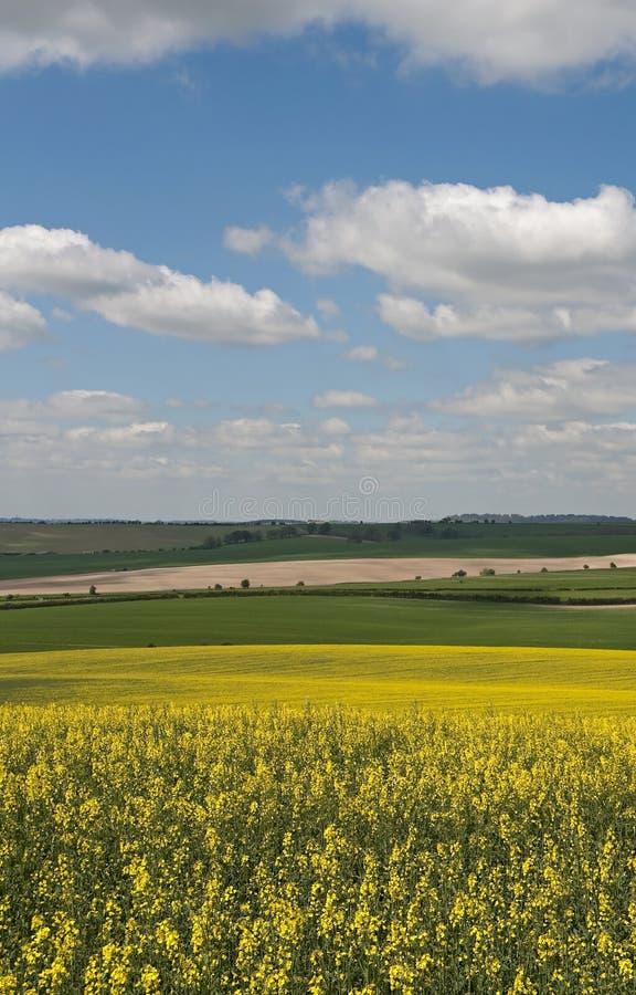 wieś Hampshire zdjęcie royalty free