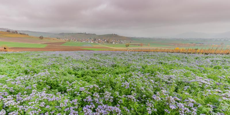 Wieś krajobraz w Szwajcaria z purpurowymi wildflower polami i kolorową rolną wioską w górkowatych ziemiach poly i idyllicznej fotografia royalty free