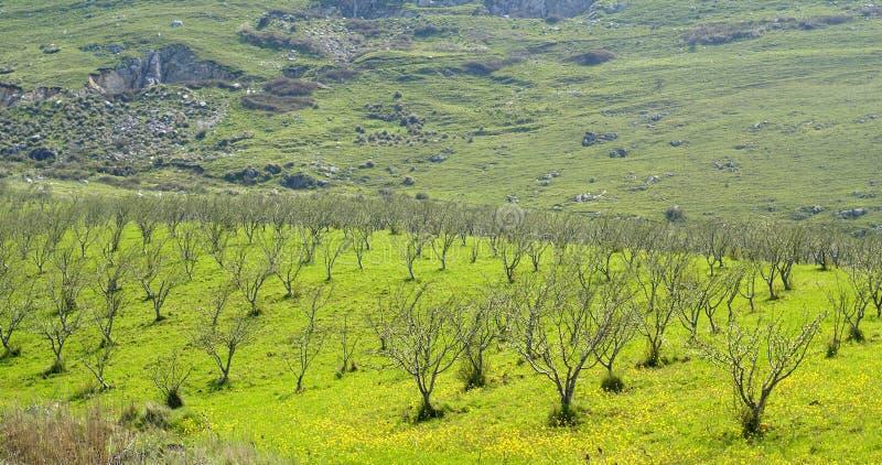 wieś Sicily fotografia stock