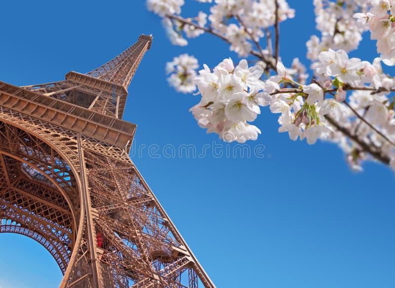 Wieża Eifla i czereśniowy okwitnięcie, Paryski wiosny pojęcie obraz stock