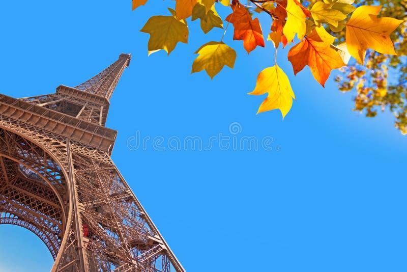 Wieża Eifla i jesienni liście, Paryż obrazy royalty free
