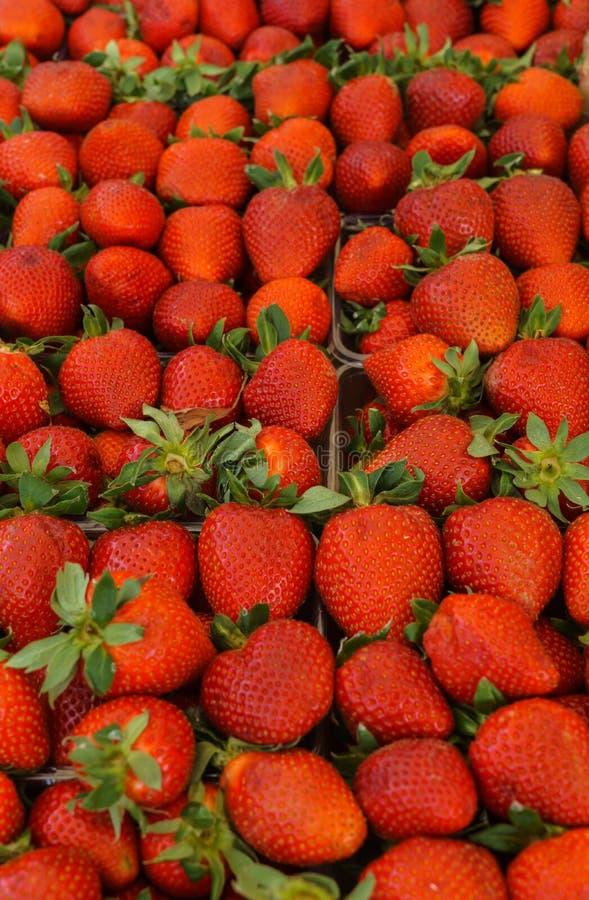 ?wie?e, fragrant truskawki w tacach przy rolnikami, wprowadza? na rynek obraz stock